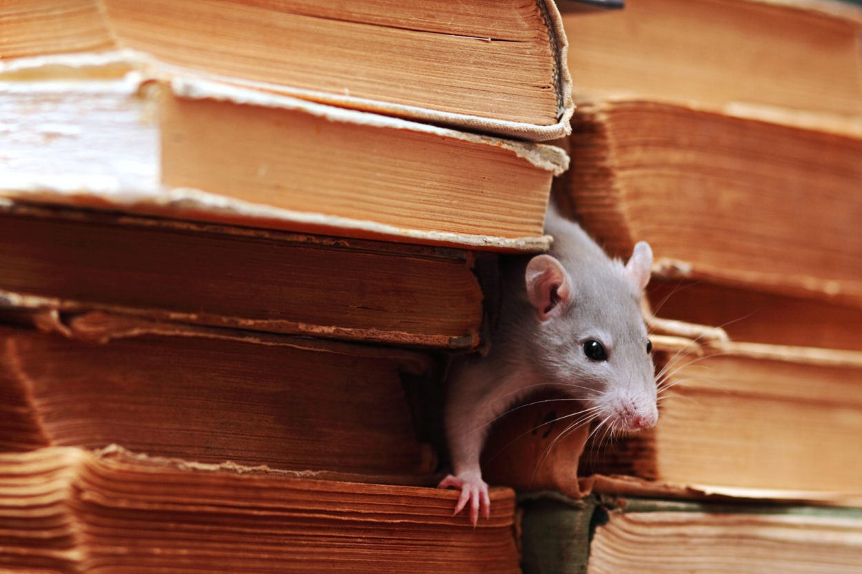 WHEN AN INVASION HAPPENS, BED VERMIN ARE OFTEN DISCOVERED: