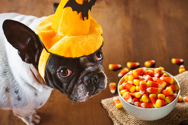 Foods Or Beverages That You Must Never Offer To Your Pet Dog