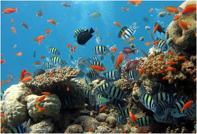 A World Heritage Site Wakatobi National Marine Park