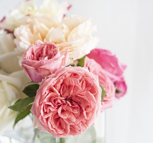 Which flower is known as Flower of God